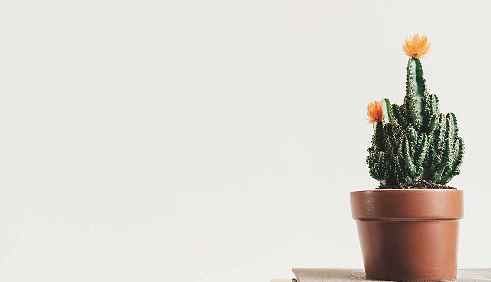 Australian indoor plants
