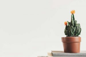 8 Indoor Plants Perfect for Australian Apartment Living