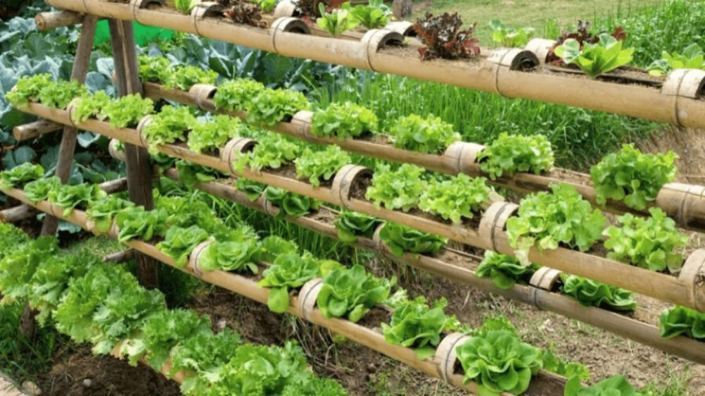 Organic vegetable vertical garden