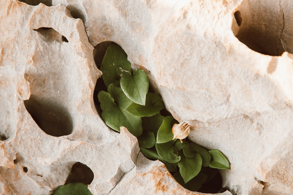 Expert Tips on Ways to Clean Limestone Retaining Walls