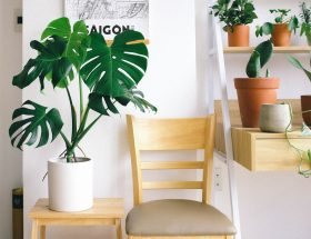 The Easiest Indoor Plants Available