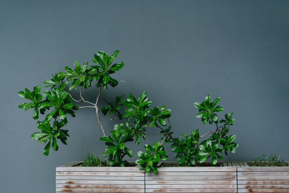 Find the easiest indoor plants
