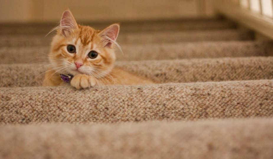 Facts About the New Ruling on NSW Strata Pet by-Laws