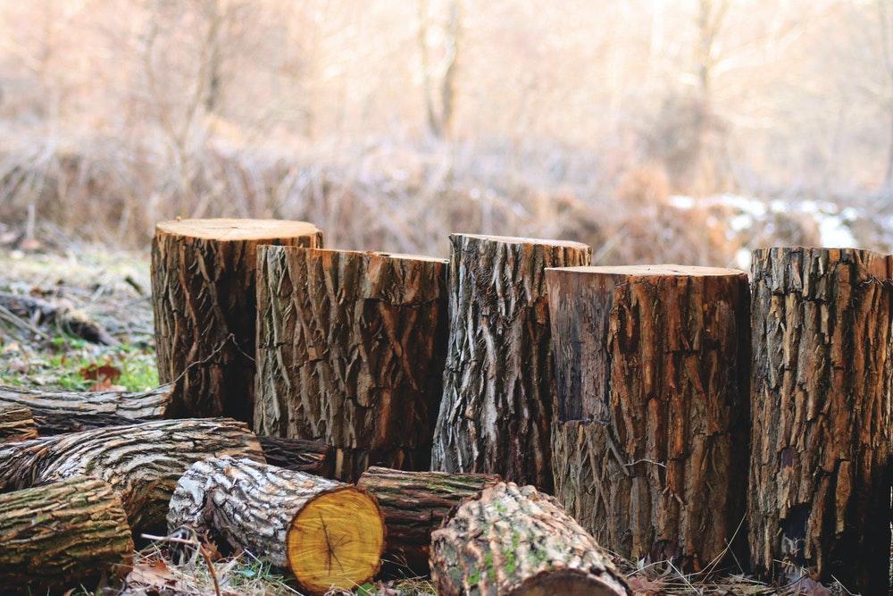 Methods for DIY Tree Stump Elimination