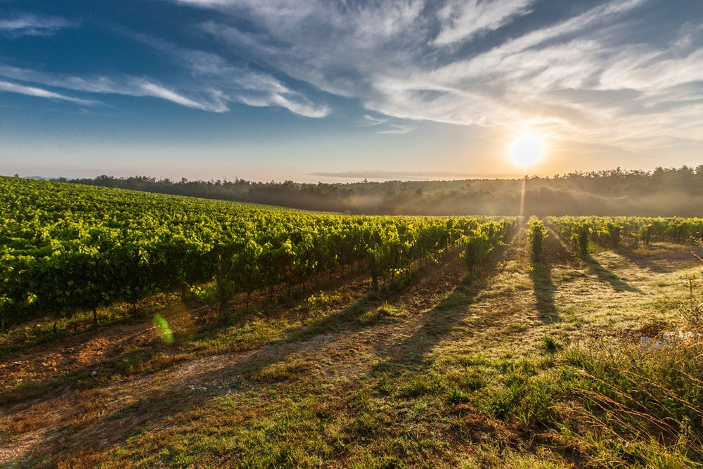 Top Australian Wine Regions You Need to Visit